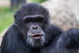 Primates, Oakland Zoo