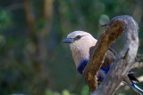 Birds of the Zoos