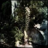Birch & Fern
