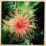 SF Zoo Flower