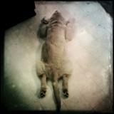 Hipstamatic Animals