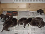 Sasha & her siblings shortly after her Birth Day (MVC-001S.JPG)