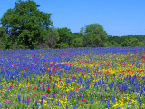 Wildflower Meadow of Harmony