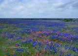 Bluebonnet Prairie Hill