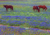 Horse and Wildflowers