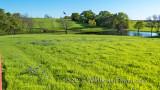Grass Problem Sugar Ridge RD