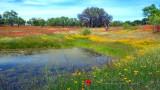 On Wildflower Pond-1080HD