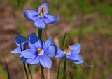 Celestials - Wildflower Angels