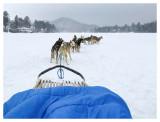 Lake Placid dog sled ride