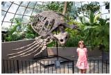 Huge sea turtle skeleton