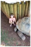One of three tortoises