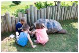 Tortoise exhibit