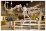 Mammoth exhibit