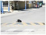 A literal street dog