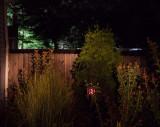 7-QL_night 3.jpg