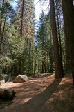 735 Yosemite forest.jpg