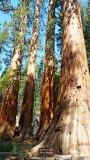 753 1 Yosemite Mariposa Grove Bachelor and Three Graces.jpg