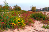 Plants On The Sand
