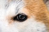 SP In Koki's Eye