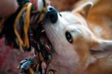 Koki Loves Playing