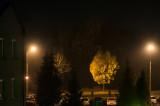 Autumnal Night