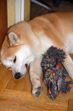 Sleeping With A Toy