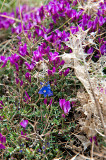 Flora Of Damavand