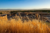 Golden Grass Of Persepolis