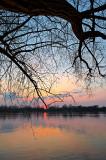 Big Tree At Sunset