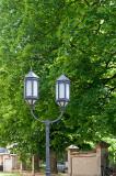 Lantern And Big Green Tree