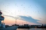 Birds In The Port