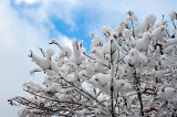 Winter Marshmallows