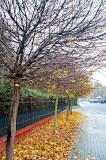 Autumn's Colorful Carpet