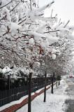 Winter's Snowy Quilt