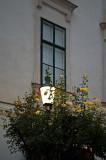 Lantern Among Yellow Roses