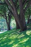 Trees @f5.6 D700