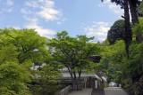 New greens at Engaku-ji @f4 QS1