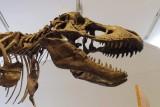 T-Rex @f4 QS1