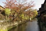 Shirakawa in Gion Kyoto @f5 QS1