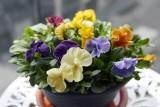 Flower pot @f4 D800E