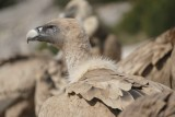Vultures and Landscapes of  The Pyrenees