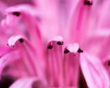 Mall Show Feb 2014 pink flower.JPG