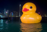 Rubber Duck by Victoria Harbour