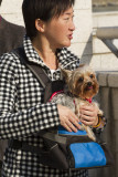 My Yorkshire Terrier and me