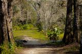 swamp trail