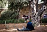 Under a Olive Tree inside Garden of Gethsemane