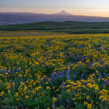 Colorful Columbia Hills Historical State Park