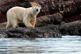 Svalbard/Spitsbergen 2013