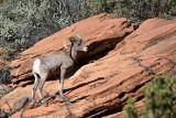 Zion Canyon area, Nov 2013