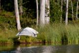 Bear safari in Northern Karelia